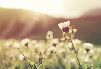 Consejos Ayurvédicos para Primavera